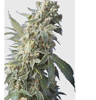 is weed legal in alaska 2021